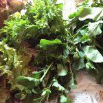 イメージ_葉もの野菜
