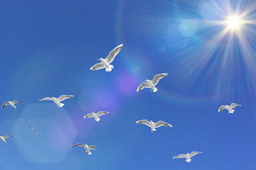 イメージ_白い鳩