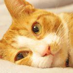 イメージ_猫の瞳