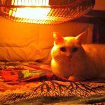 イメージ_こたつと猫