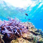 イメージ_珊瑚礁