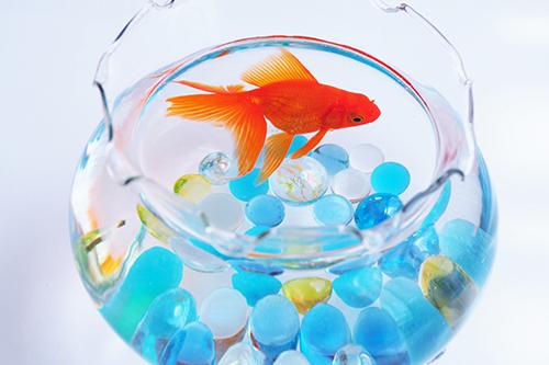 イメージ_金魚鉢