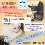 犬と猫のカフェ 有吉工務店 ミニ譲渡会