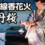 国産線香花火「牡丹桜」